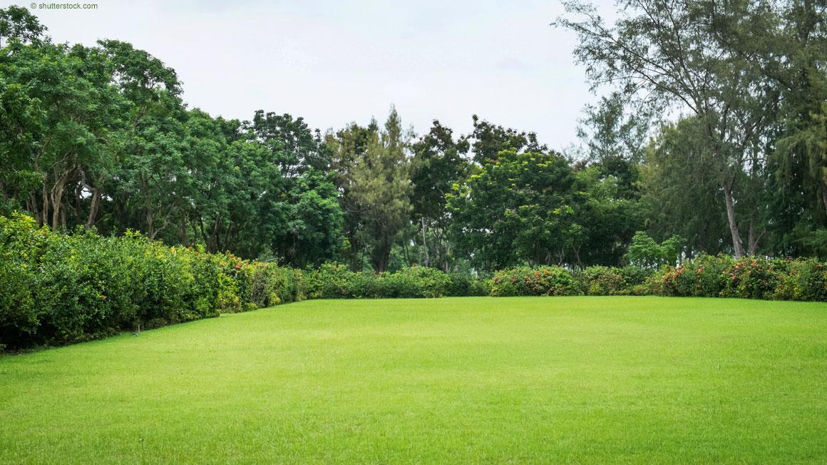 Seminar Der Rasen Im Frühjahr Die Haus Und Garten Welt